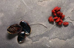Washington - Group Wants Insect Parts Out of Food Coloring