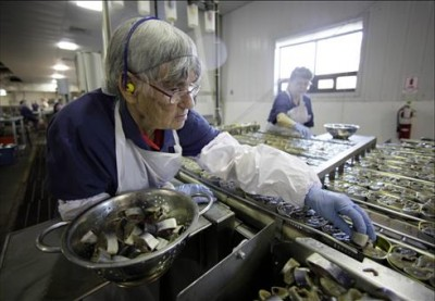 ela Anderson fills cans with sardine steaks at the Stinson sardine cannery in Gouldsboro, Maine. Anderson has worked at the cannery for 54 years.