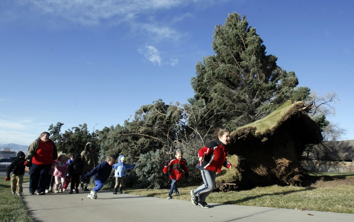 Kindergarteners from a Jewish Community Center in Salt Lake City, Utah, take a quick field trip to the front of the JCC   to check out the large pine that was knocked over by strong winds  on Thursday, Dec. 1, 2011.   High winds ripping through Utah have overturned several semi-trucks, knocked out power to more than 50,000 customers and prompted school closures.  (AP Photo/ The Salt Lake Tribune, Francisco Kjolseth)