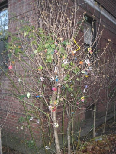In this file photo: Outside 1450 48th Street, in an apartment building called The Plymouth, there are two bare trees on either side of the walkway leading to the entrance. Their branches are utterly loaded with used, discarded pacifiers. Photo LostCity Blog