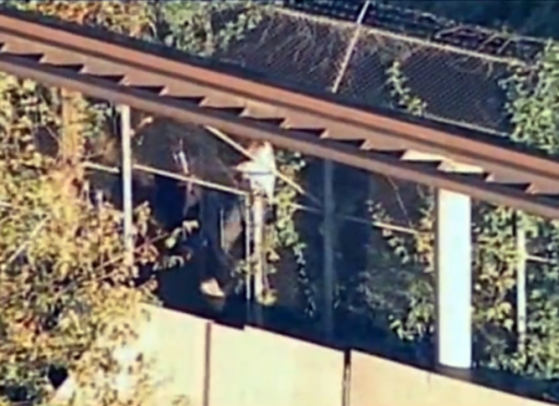 This Friday, Sept. 21, 2012 image from video provided by WABC shows authorities investigating the scene where a man was mauled by a tiger at the Bronx Zoo in New York. (Photo: AP)