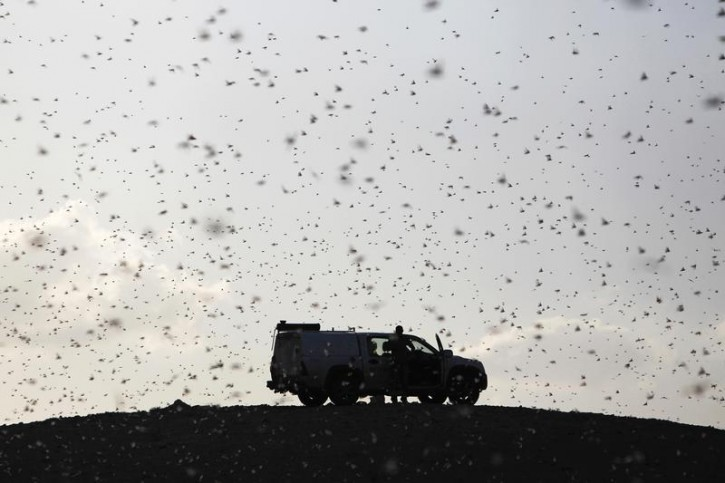 Locusts fly near a car belonging to experts as they map the swarms of locusts near Kmehin in Israel's Negev desert March 5, 2013. The Israeli Ministry of Agriculture and Rural Development said on Tuesday that the location of the locusts which crossed into Israel from neighbouring Egypt had been mapped and and will be fumigated tomorrow. REUTERS/Amir Cohen