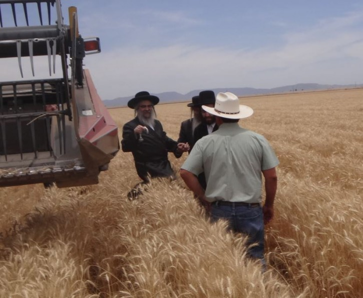 The Rebbe being greeted by farmer Tim Dunn after participating in harvesting the first row in the combine machine.