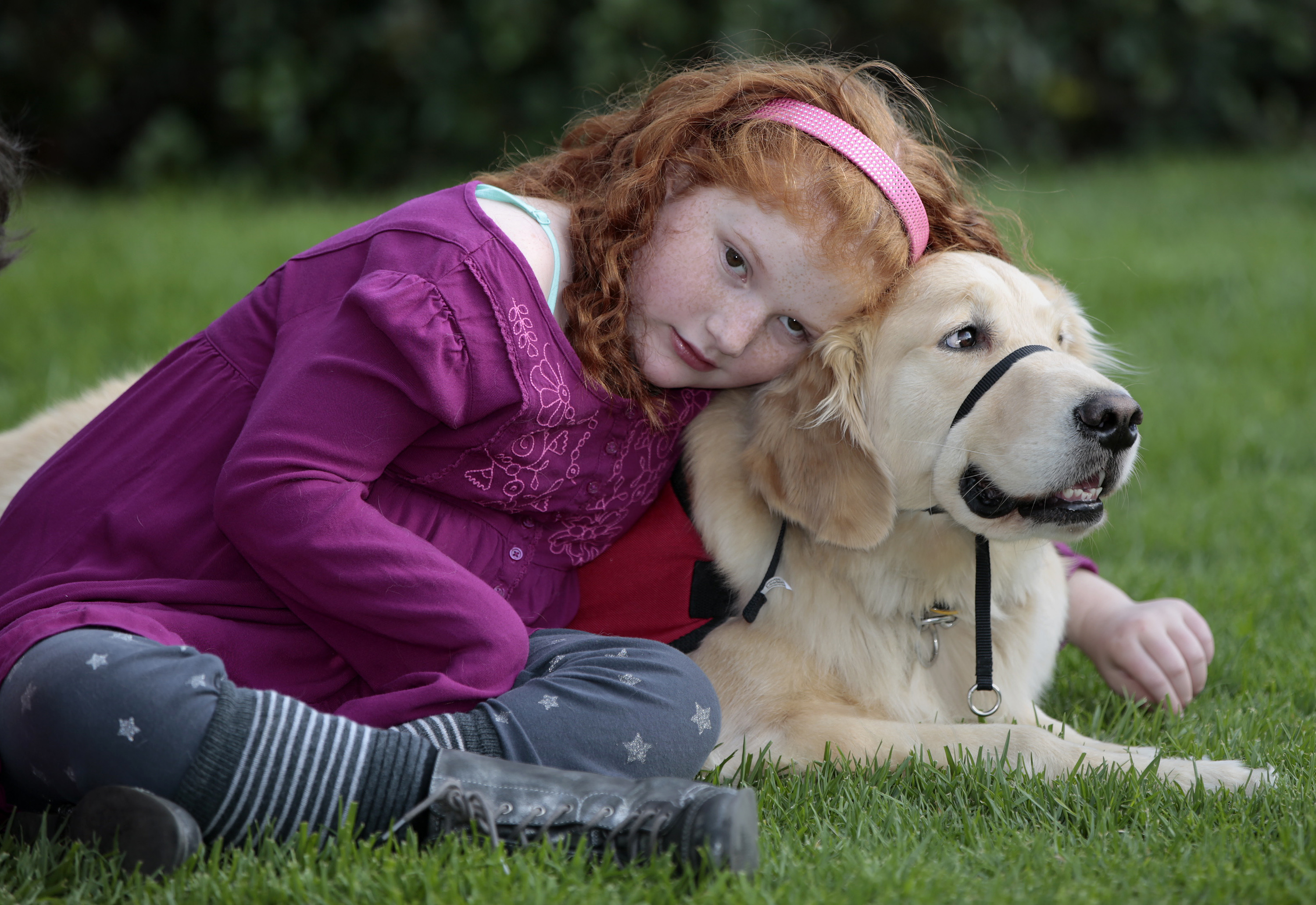 What To Give A Dog For Seizures