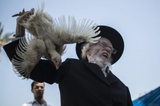 An ultra-Orthodox Jewish man holds a live chicken while reciting prayers for the 'Kaparot' ritual in Bnei Brak, outside Tel Aviv, 11 September 2013. Credit: EPA