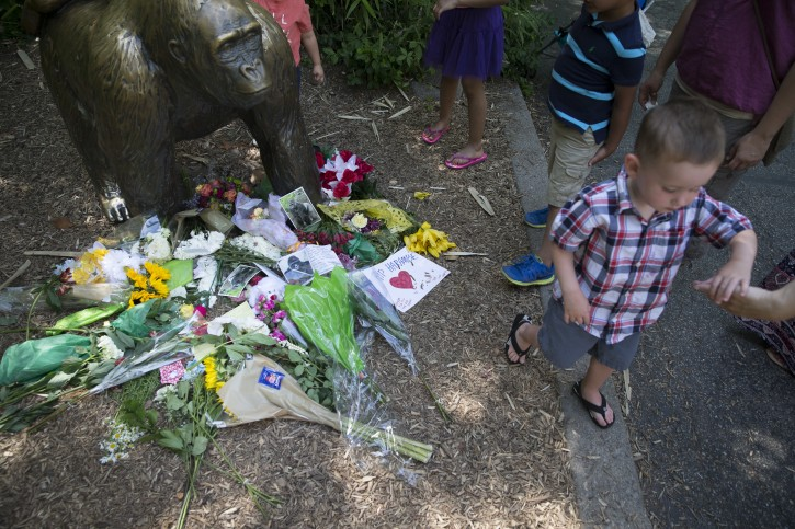 A boy is led away after putting flowers beside a statue of a gorilla outside the shuttered Gorilla World exhibit at the Cincinnati Zoo & Botanical Garden, Monday, May 30, 2016, in Cincinnati. A gorilla named Harambe was killed by a special zoo response team on Saturday after a 4-year-old boy slipped into an exhibit and it was concluded his life was in danger. (AP Photo/John Minchillo)