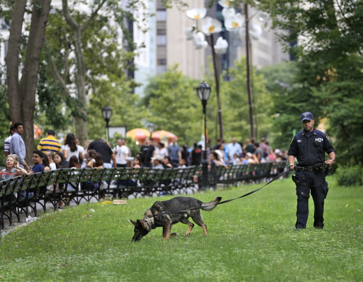 A bomb-sniffing dog works near the scene of an explosion in Central Park, New York, Sunday, July 3, 2016. AP
