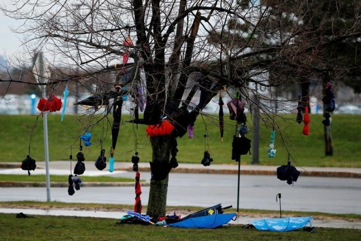 Umbrellas hang from a tree outside a U.S. Democratic presidential candidate and U.S. Senator Bernie Sanders rally at the University of Buffalo in Buffalo, New York April 11, 2016. U.S. Secret Service did not permit audience members to bring umbrellas in to the rally. REUTERS/Brian Snyder