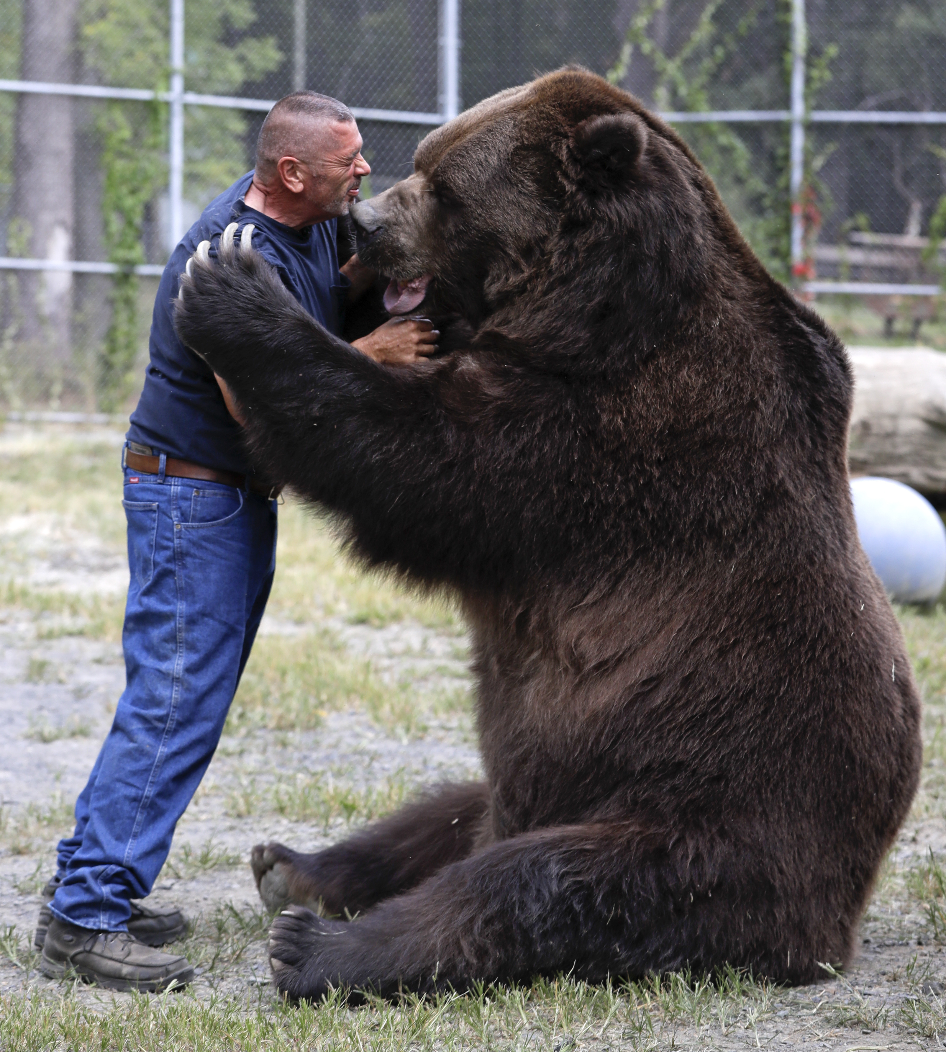 otisville ny bear with him man grabs attention for. Black Bedroom Furniture Sets. Home Design Ideas