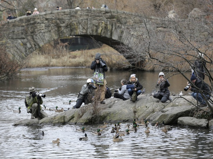 People try to get a look at and pictures of a Mandarin duck in Central Park in New York, Wednesday, Dec. 5, 2018. In the weeks since it appeared in Central Park, the duck has become a celebrity. (AP Photo/Seth Wenig)