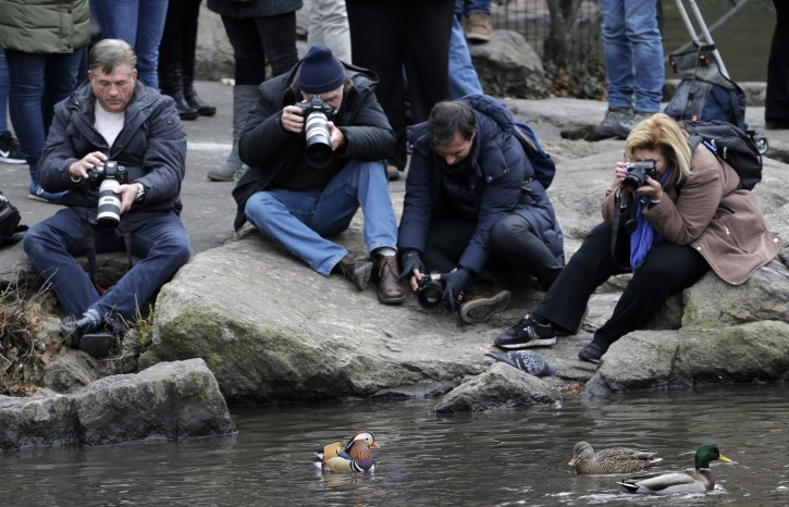 People try to get pictures of a Mandarin duck, center, in Central Park in New York, Wednesday, Dec. 5, 2018. (AP Photo/Seth Wenig)