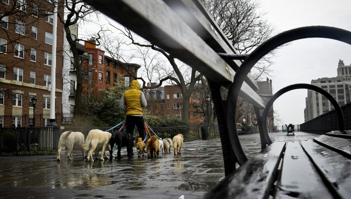 Dogs are walked along Brooklyn Heights Promenade during a rainy day, Friday April 5, 2019, in New York.  The promenade makes up the top deck over-hang of a deteriorating Brooklyn-Queens Expressway and the city's plans for repairs has drawn neighborhood protest, since it calls for a temporary six lane highway on the promenade.  (AP Photo/Bebeto Matthews)